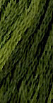 Gentle Art Sampler Threads - Green with Envy-Gentle Art Sampler Threads - Green with Envy, threads, floss, cross stitch